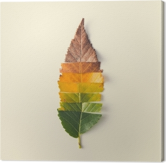 Leinwandbild Kreatives Layout von bunten Herbstblättern.
