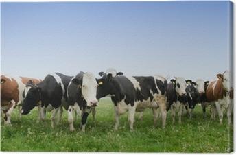 Leinwandbild Kuh auf einer Wiese