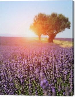 Leinwandbild Lavendelfeld in der Provence, Frankreich