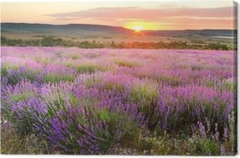 Leinwandbild Lavendelfelder