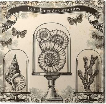 Leinwandbild Le Cabinet de Curiosités