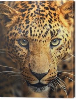 Leinwandbild Leopard Portrait