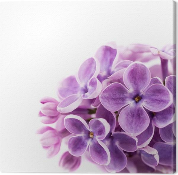 Leinwandbild Lila Blumen auf einem weißen Hintergrund • Pixers ...