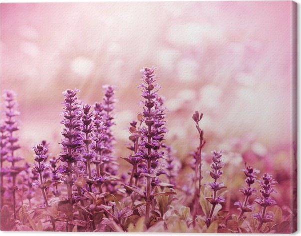 Leinwandbild Lila Blumen beleuchtet durch Sonnenlicht • Pixers ...
