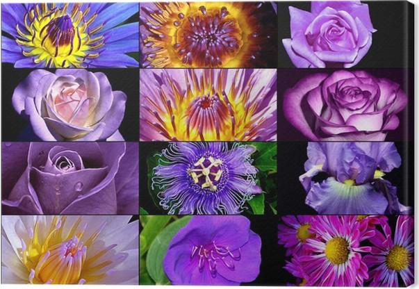 Leinwandbild Lila Blumen-Collagen- • Pixers® - Wir leben, um zu ...