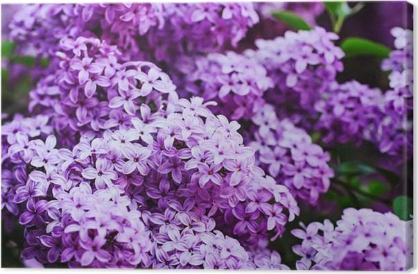 Leinwandbild Lila Blumen Hintergrund • Pixers® - Wir leben, um zu ...