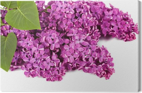 Leinwandbild Lila Blüte. • Pixers® - Wir leben, um zu verändern