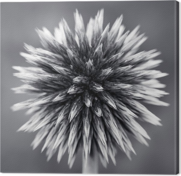 Leinwandbild Lila Kugel-Distel-B • Pixers® - Wir leben, um zu verändern
