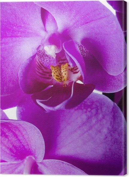 Leinwandbild Lila Orchidee auf dem schwarzen Hintergrund • Pixers ...