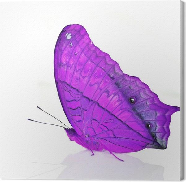 Leinwandbild Lila の Schmetterling • Pixers® - Wir leben, um zu ...