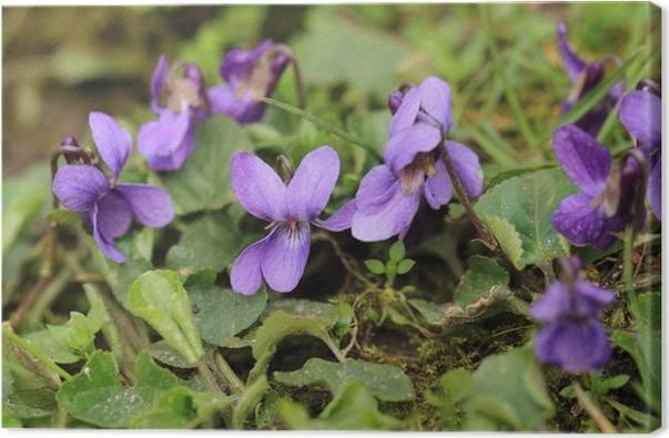 Leinwandbild Lila violetten Blüten • Pixers® - Wir leben, um zu ...