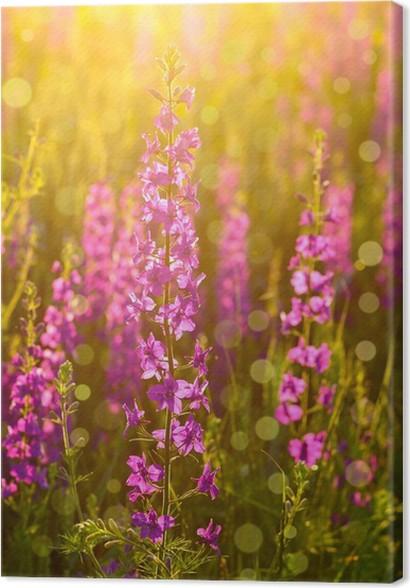 Leinwandbild Lila wilde Blumen im Sonnenlicht • Pixers® - Wir leben ...
