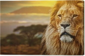 Leinwandbild Lion portrait auf Savanne Hintergrund und Mount Kilimanjaro