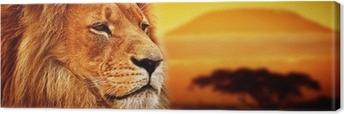 Leinwandbild Lion Portrait auf Savanne. Mount Kilimanjaro bei Sonnenuntergang. Safari