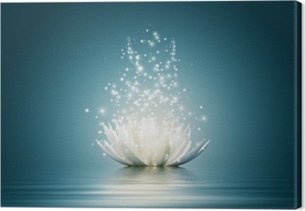 Leinwandbild Lotus flower