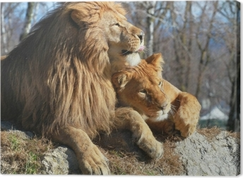 Leinwandbild Löwe und Löwin