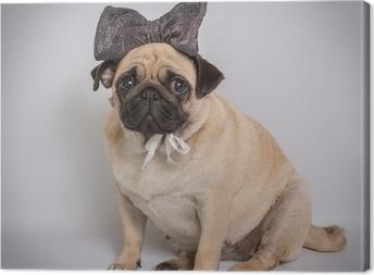 Leinwandbild Lustige Pug / Lustige Pug auf weißem Hintergrund