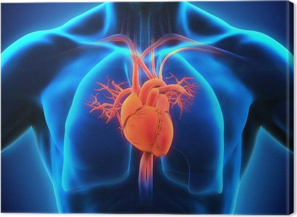 Leinwandbild Menschliches Herz Anatomie • Pixers® - Wir leben, um zu ...