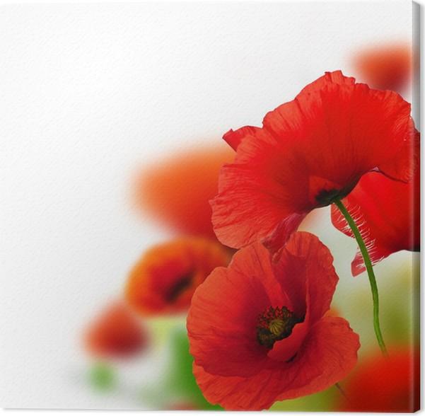 Leinwandbild mohn weiem hintergrund rote blumen rahmen pixers leinwandbild mohn weiem hintergrund rote blumen rahmen thecheapjerseys Images