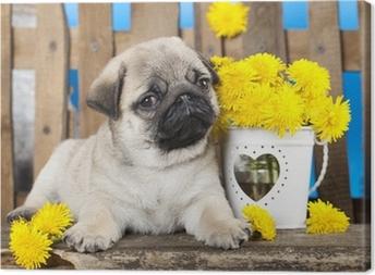 Leinwandbild Mops Welpen und Frühling Blumen Löwenzahn