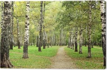 Leinwandbild Morgen Herbst Birkenhain in der Ende September