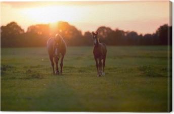 Leinwandbild Mutter Pferd mit Fohlen auf Ackerland bei Sonnenuntergang. geesteren. achter