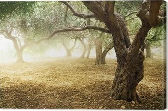 Leinwandbild Old Olive Trees