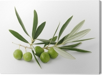Leinwandbild Olive verdi e ramoscelli - Olivgrün und Zweigen