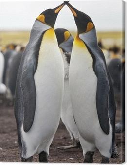 Leinwandbild Paar Königspinguine