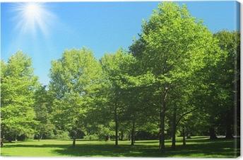 Leinwandbild Park