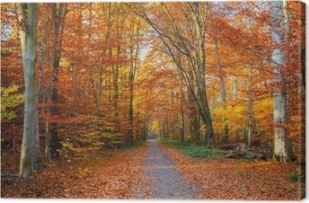 Leinwandbild Pathway in den herbstlichen Wald