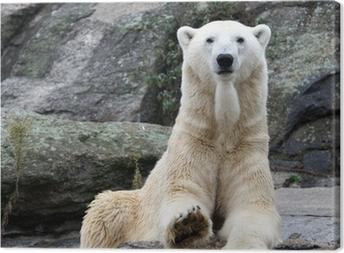 Leinwandbild Polar bear portrait