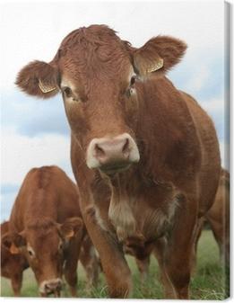 Leinwandbild Porträt der Kuh