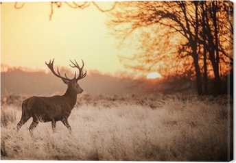 Leinwandbild Red Deer in Morgensonne.