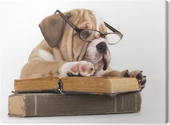 Leinwandbild Reinrassige Englisch Bulldog in Gläsern und Buch
