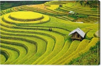 Leinwandbild Reisfelder auf Terrassen in vietnam