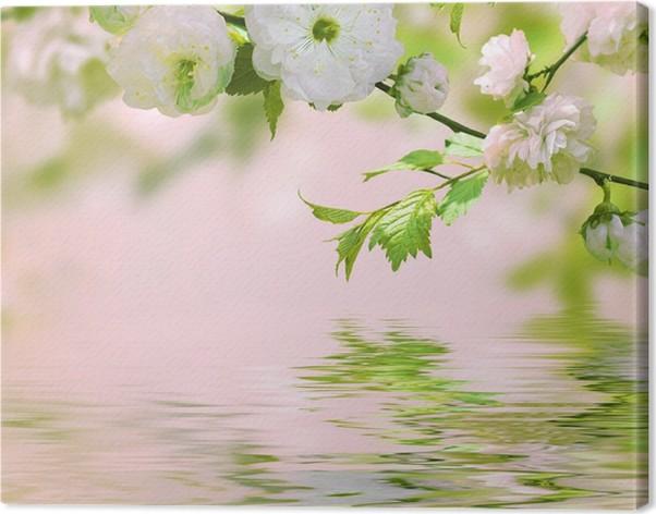 leinwandbild rosa blume von einer orientalischen kirsche in einem fr hlingsgarten wasser. Black Bedroom Furniture Sets. Home Design Ideas