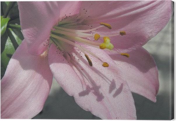 leinwandbild rosa lilie blume mit langen staubf den pixers wir leben um zu ver ndern. Black Bedroom Furniture Sets. Home Design Ideas