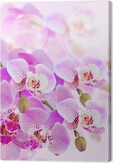 Leinwandbild Rosa Orchidee Zweig close up