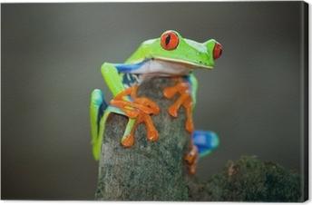 Leinwandbild Rotaugenfrosch, Frosch, Costa Rica