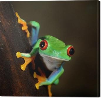 Leinwandbild Rote-Augen-Frosch Rotaugenlaubfrosch im Terrarium
