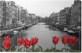 Leinwandbild Rote Tulpen in Amsterdam