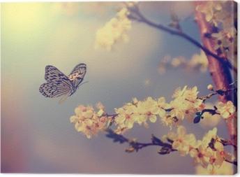 Leinwandbild Schmetterling und Kirschblüte