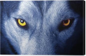 Leinwandbild Schöne Augen eines wilden Wolf.