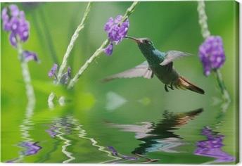Leinwandbild Schöne Kolibri in der Reflexion