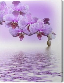 Leinwandbild Schöne lila Orchidee