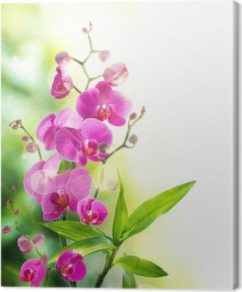 leinwandbild sch ne orchidee und bambus f r wellness grenze pixers wir leben um zu ver ndern. Black Bedroom Furniture Sets. Home Design Ideas