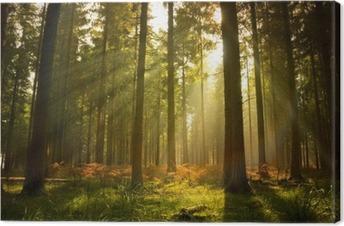Leinwandbild Schöner Wald