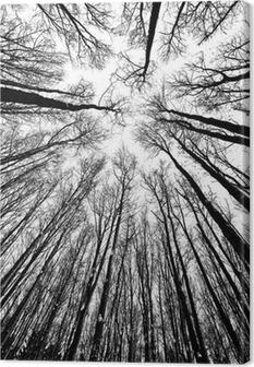 Leinwandbild Schwarz-Weiß-Silhouetten Bäume