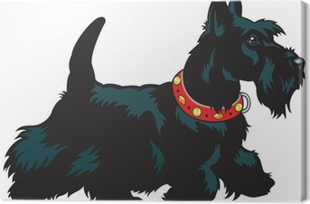 Leinwandbild Scottish Terrier
